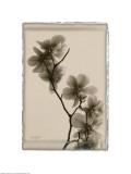 Magnolia Polaroid Prints
