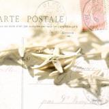Postal Shells II Posters af Deborah Schenck
