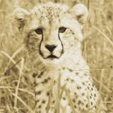 Young Cheetah Posters par Susann Parker