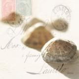Postal Shells IV Print by Deborah Schenck