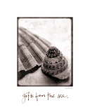 Gifts from the Sea Poster by Sue Schlabach