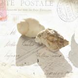 Postal Shells I Plakater af Deborah Schenck