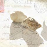 Postal Shells I Prints by Deborah Schenck