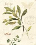 Aromatique IV Poster af Lisa Audit