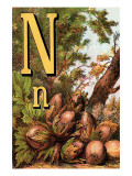 N For the Nut That He Cracks With a Grin Print by Edmund Evans