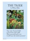 Der Tiger Kunstdrucke von William Blake