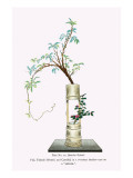 Fuji & Tsubaki (Wisteria And Camellia) In a Two Story Bamboo Vase Posters by Josiah Conder