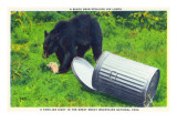 Great Smoky Mts Nat'l Park, TN - Black Bear Stealing Lunch from Trashcan Poster by  Lantern Press