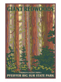 Pfeiffer Big Sur State Park, California - Giant Redwoods Poster by  Lantern Press