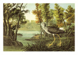 Lesser Yellow Legs Poster by John James Audubon
