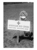 Sandy, the American Red Cross Dog Welcomes Everyone Posters