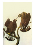 Roughlegged Hawk Affiches par John James Audubon