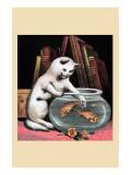 Foolish Kitten Prints
