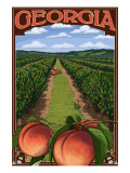Georgia - Peach Orchard Scene Prints