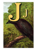 J For the Jackdaw, Perky And Bold Prints by Edmund Evans
