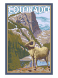 Colorado - Big Horn Sheep Art by  Lantern Press