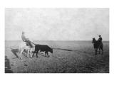 Horseback Cowboys Leading a Bull Posters