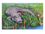 Florida - An Old-Timer in Florida, Alligator Poses Art Print