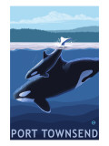 Port Townsend, WA - Orca & Calf Posters by  Lantern Press
