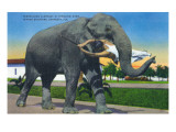 Sarasota, Florida - Ringling Brothers Circus; Elephant Holding Man with Mouth Posters