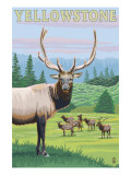 Yellowstone Nat'l Park - Elk Herd Art by  Lantern Press