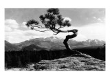 Colorado - Longs Peak from the Lone Pine on High Drive Giclée-Premiumdruck von  Lantern Press