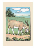 Brother Bill the Billy Goat Prints by Julia Dyar Hardy