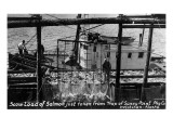 Ketchikan, Alaska - Loading Salmon Caught by Sunny Point Traps Prints