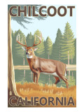 Chilcoot, California - White-Tailed Deer Posters by  Lantern Press
