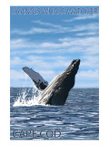 Hyannis Whale Watcher - Cape Cod, MA Posters by  Lantern Press