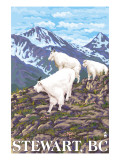 Stewart, BC - Goat Family Print by  Lantern Press