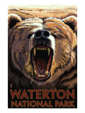 Waterton National Park, Canada - Bear Roaring Print by  Lantern Press