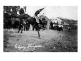 Calgary, Canada - Rodeo; Bucking Horse at the Stampede Art by  Lantern Press