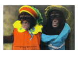 St. Louis, Missouri - Forest Park Zoo Chimpanzees in Costume Print