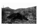 Alaska - View of a Kodiak Bear Prints