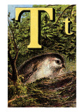T For the Tomtit Building Its Nest Posters by Edmund Evans