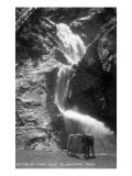 Colorado Springs, Colorado - South Cheyenne Canyon; Burro at Seven Falls Poster di  Lantern Press