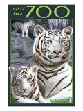 Visit the Zoo - White Tiger Family Prints by  Lantern Press