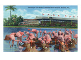Hialeah, Florida - View of Flamingos outside the Hialeah Race Course Prints by  Lantern Press