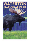 Waterton National Park, Canada - Moose at Night Prints by  Lantern Press