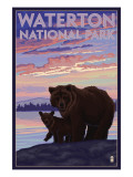 Waterton National Park, Canada - Bear & Cub Poster