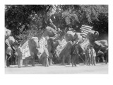 Circus Elephants Visit the White House Prints