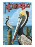 Morro Bay, CA - Pelicans Posters by  Lantern Press