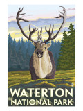 Waterton National Park, Canada - Caribou Affiches