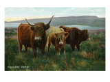Scotland - View of Highland Cattle Póster por Lantern Press