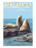 Ventura, California - Sea Lions Poster