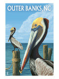 Outer Banks, North Carolina - Pelicans Affiches par  Lantern Press
