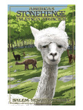 America's Stonehenge, New Hampshire - Alpacas Prints by  Lantern Press