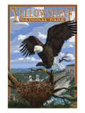 Eagle Perched - Yellowstone National Park Art by  Lantern Press