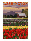 Orca and Calf - Tulip Fields Posters